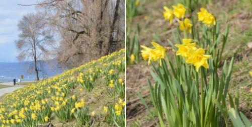 2018년 봄 꽃들이 피기 시작한 밴쿠버