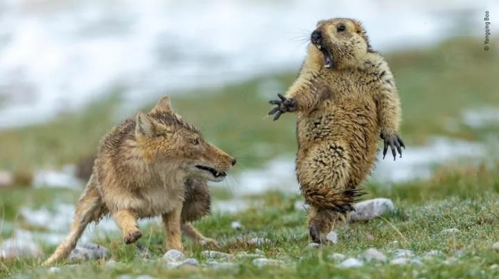 [포토뉴스]올해의 야생동물 사진